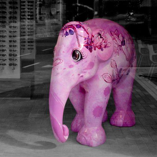 vd-wiel-optiek-olifant